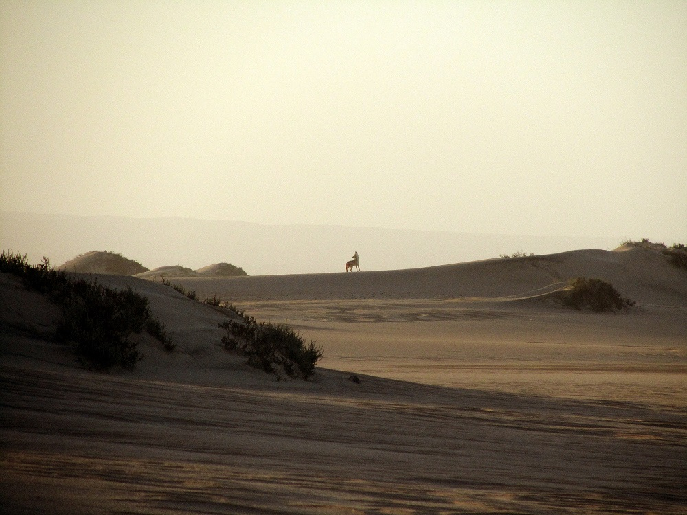 slow travel in the desert with wild jackal on the horizon